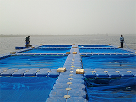 floating cage fish farming