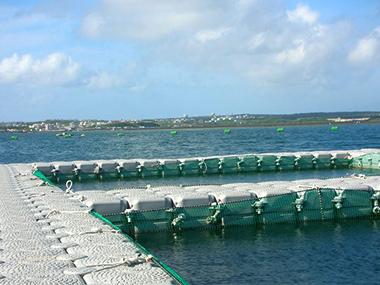 Fish Farm Abroad