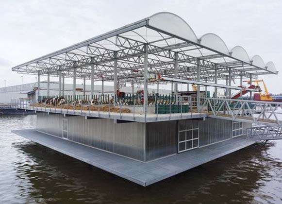 floating dairy farm