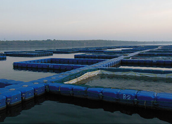 Pontoon Cages on Water Body