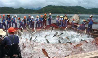 Small-Scale Fish Farming